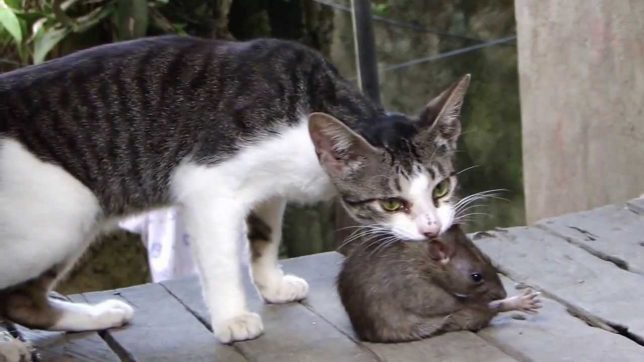 Cat And Mice Getting Along